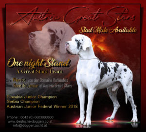 Zucht Rüde One Night Stand