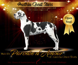 Stud Male Parodie D'Amour of Austria Great Stars