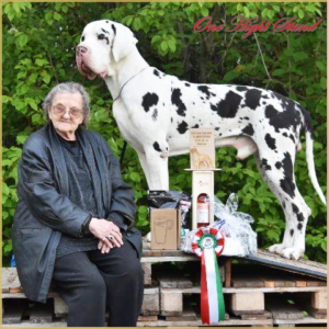 Danubius Dogclub Winner 2019