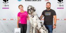 Dog Expo Nitra 2019