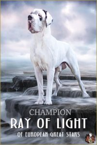 Deutsche Dogge/Great Dane Ray of Light