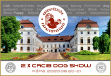 Int. Dogshow PAPA 2020